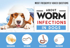 Worms in Dogs: The Worst Enemy of Man's Best Friend